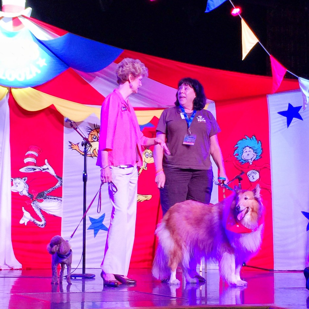 Carnival Cruise Lines Puppies from the Tampa Bay SPCA