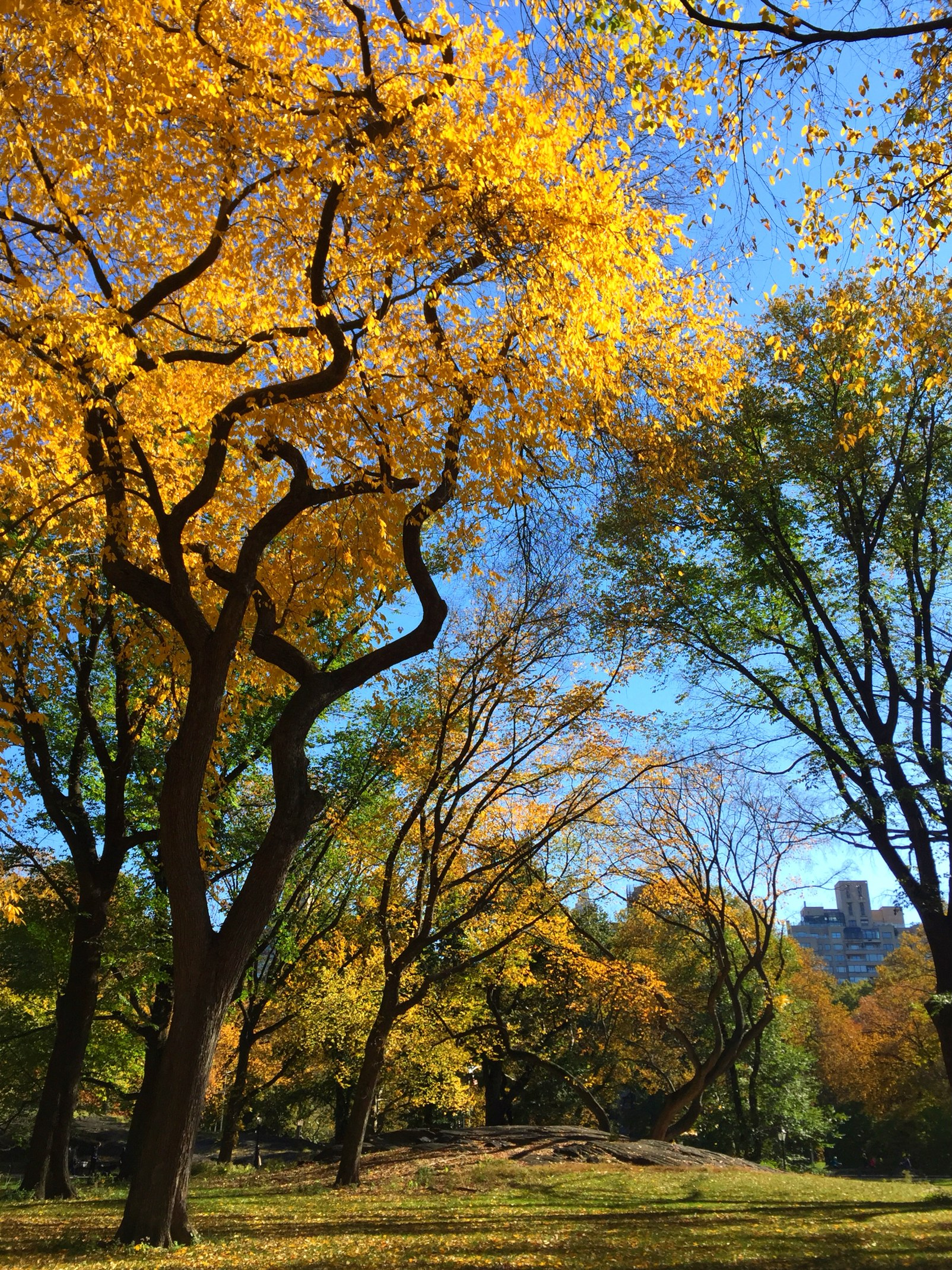 A fall afternoon in new york city s central park what for What can you do in new york city