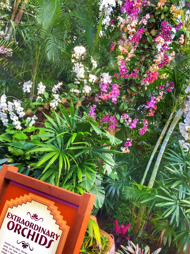 Disney's Epcot International Flower and Garden Festival Orchids